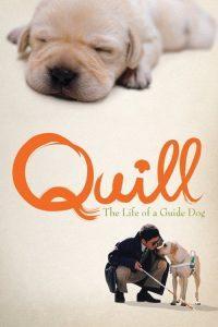 Quill – The Life of a Guide Dog (2004) โฮ่ง (ฮับ) เจ้าตัวเนี้ยซี้ 100%